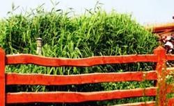 Roślinna przydomowa oczyszczalnia ścieków i jej rodzaje