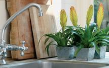 Rośliny doniczkowe, które sprawdzą się w kuchni. Zobacz 9 propozycji kwiatów doniczkowych atrakcyjnych przez cały rok