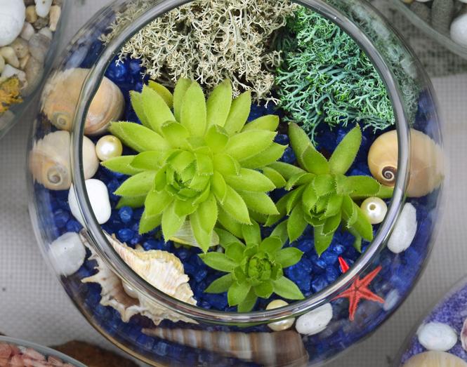 Uprawa roślin w szkle