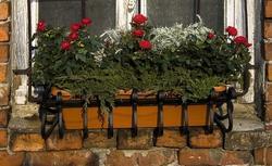 Kwiatowe kompozycje z róż, ziół i jałowca. Oryginalny pomysł na kwiaty w skrzynkach