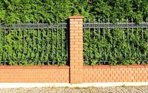 Jaki żywopłot wybrać do ogrodu: liściasty czy iglasty? Sadzenie i cięcie żywopłotu liściastego i iglastego